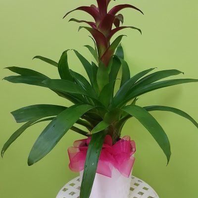 Bromeliad. Away With Flowers. Mundingburra Florist.