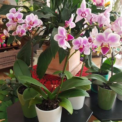 Orchids. Away With Flowers. Mundingburra Florist.