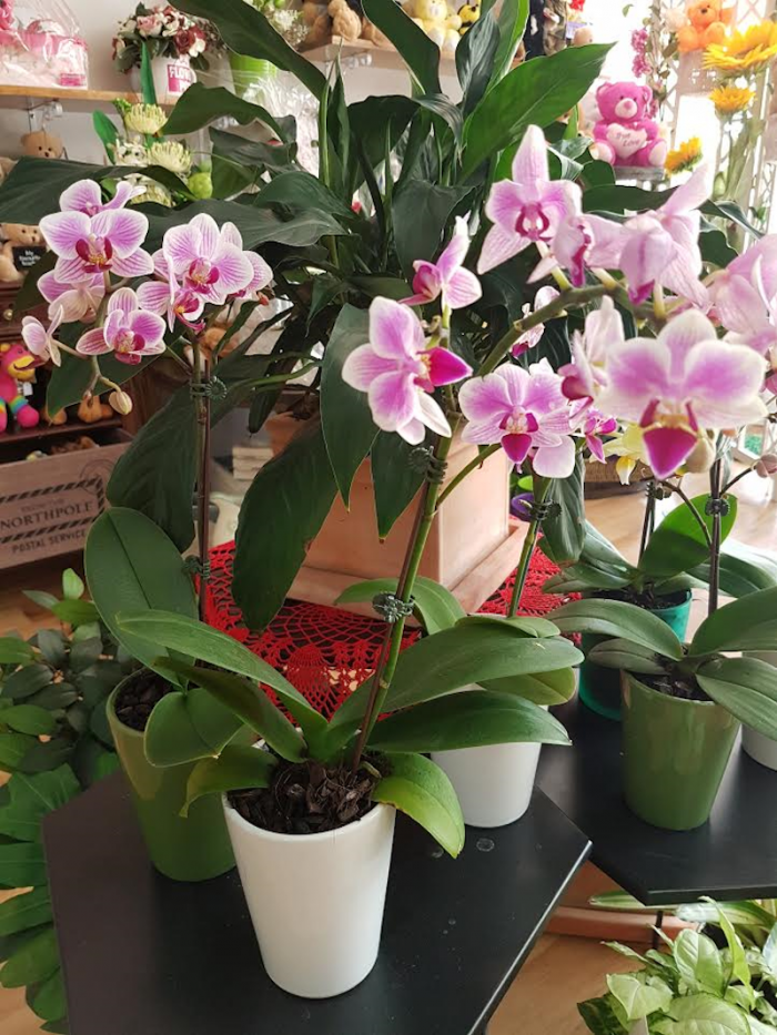 Orchids. Away With Flowers. Mundingburra Florist.